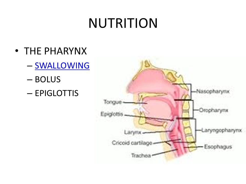 NUTRITION THE PHARYNX – SWALLOWING SWALLOWING – BOLUS – EPIGLOTTIS