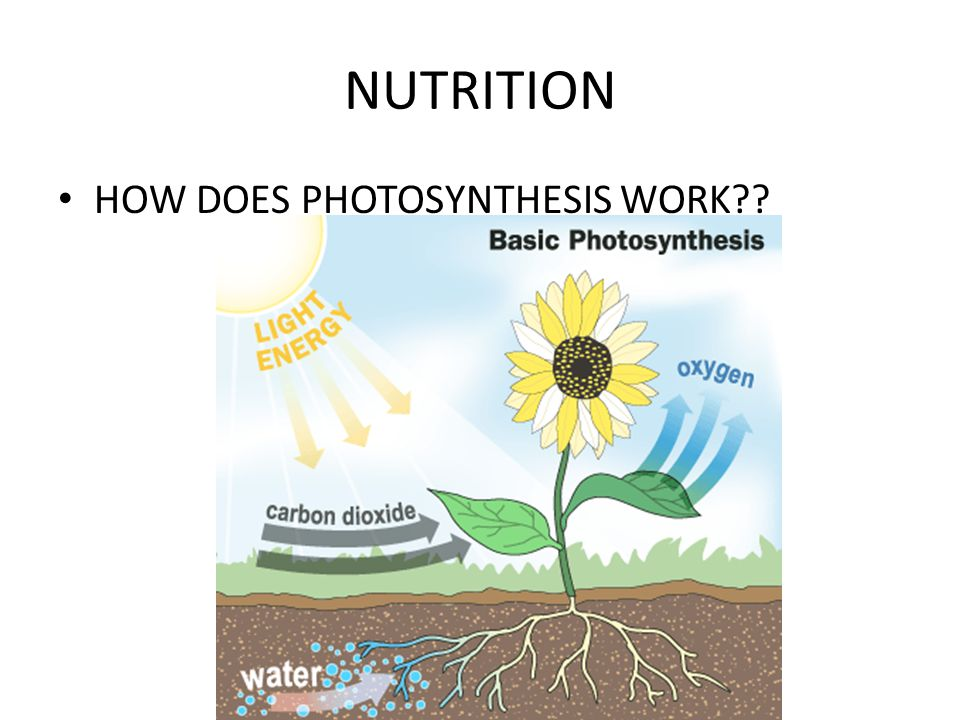 NUTRITION HOW DOES PHOTOSYNTHESIS WORK??