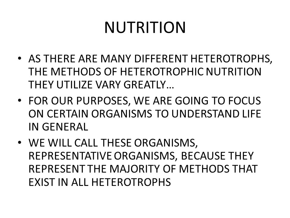 NUTRITION AS THERE ARE MANY DIFFERENT HETEROTROPHS, THE METHODS OF HETEROTROPHIC NUTRITION THEY UTILIZE VARY GREATLY… FOR OUR PURPOSES, WE ARE GOING T