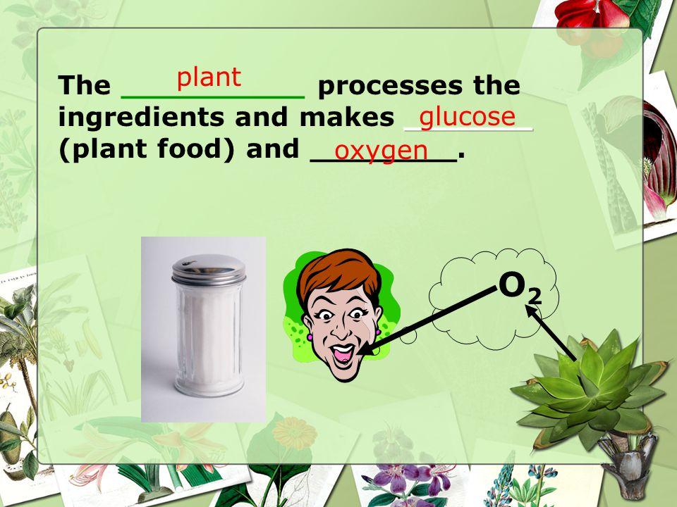 O2O2 plant glucose oxygen