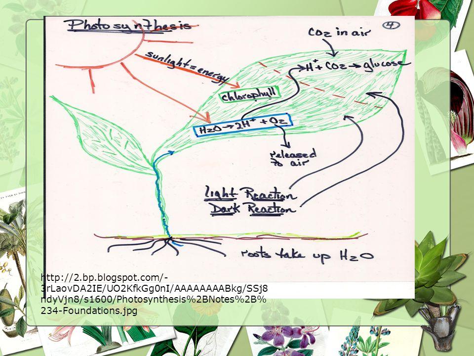 http://2.bp.blogspot.com/- 3rLaovDA2IE/UO2KfkGg0nI/AAAAAAAABkg/SSj8 ndyVjn8/s1600/Photosynthesis%2BNotes%2B% 234-Foundations.jpg