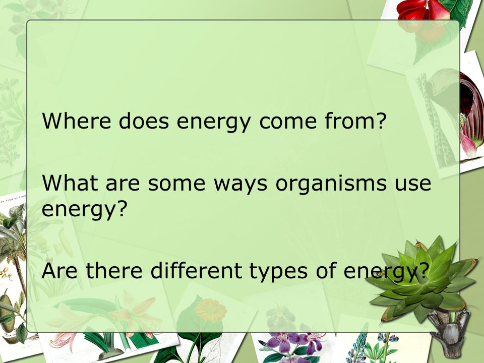 Where does energy come from. What are some ways organisms use energy.