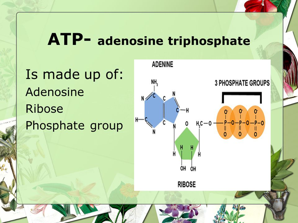 ATP- adenosine triphosphate Is made up of: Adenosine Ribose Phosphate group