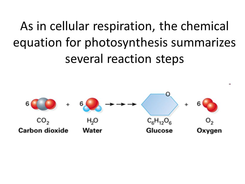 As in cellular respiration, the chemical equation for photosynthesis summarizes several reaction steps