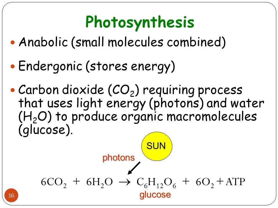 Photosynthesis 16 Anabolic (small molecules combined) Endergonic (stores energy) Carbon dioxide (CO 2 ) requiring process that uses light energy (phot