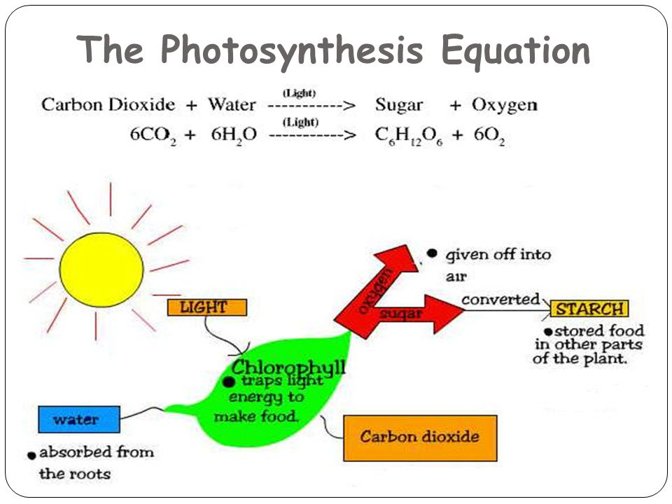 The Photosynthesis Equation 17