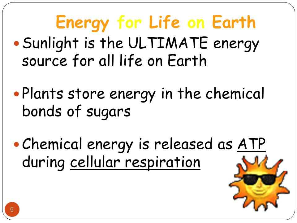 Energy for Life on Earth 5 Sunlight is the ULTIMATE energy source for all life on Earth Plants store energy in the chemical bonds of sugars Chemical e