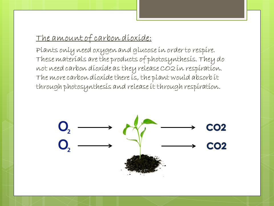 The amount of carbon dioxide: Plants only need oxygen and glucose in order to respire.