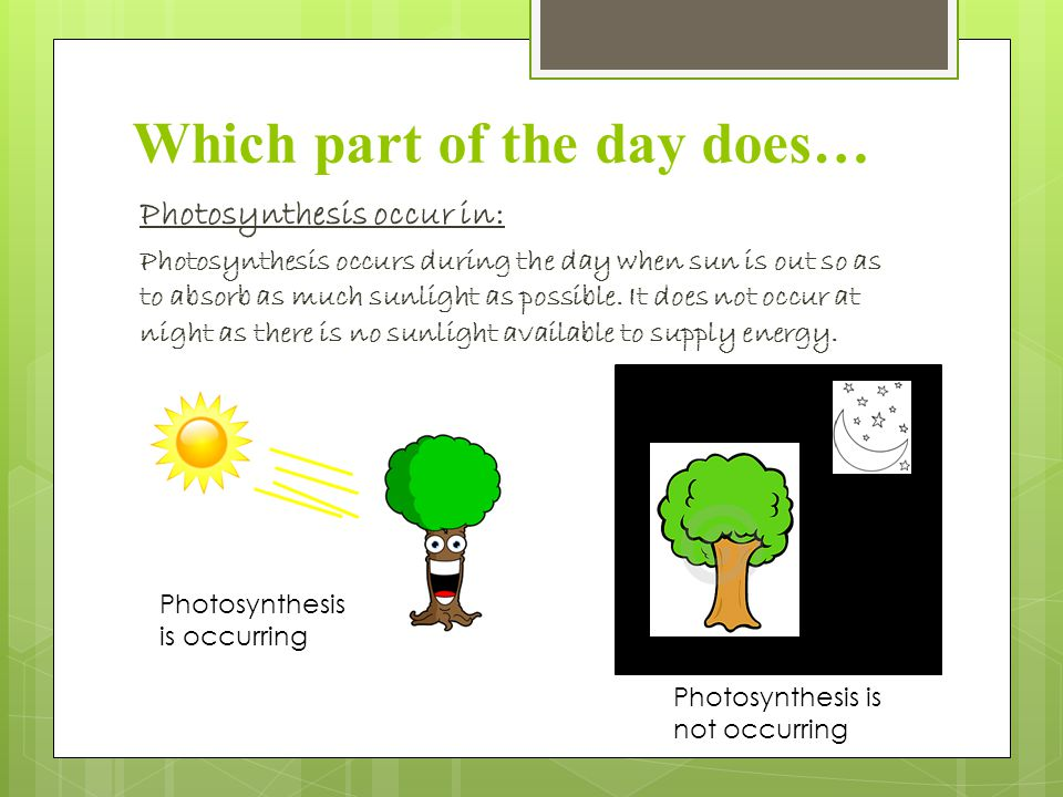 Which part of the day does… Photosynthesis occur in: Photosynthesis occurs during the day when sun is out so as to absorb as much sunlight as possible.