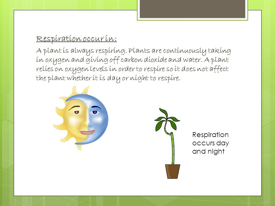 Respiration occur in: A plant is always respiring.