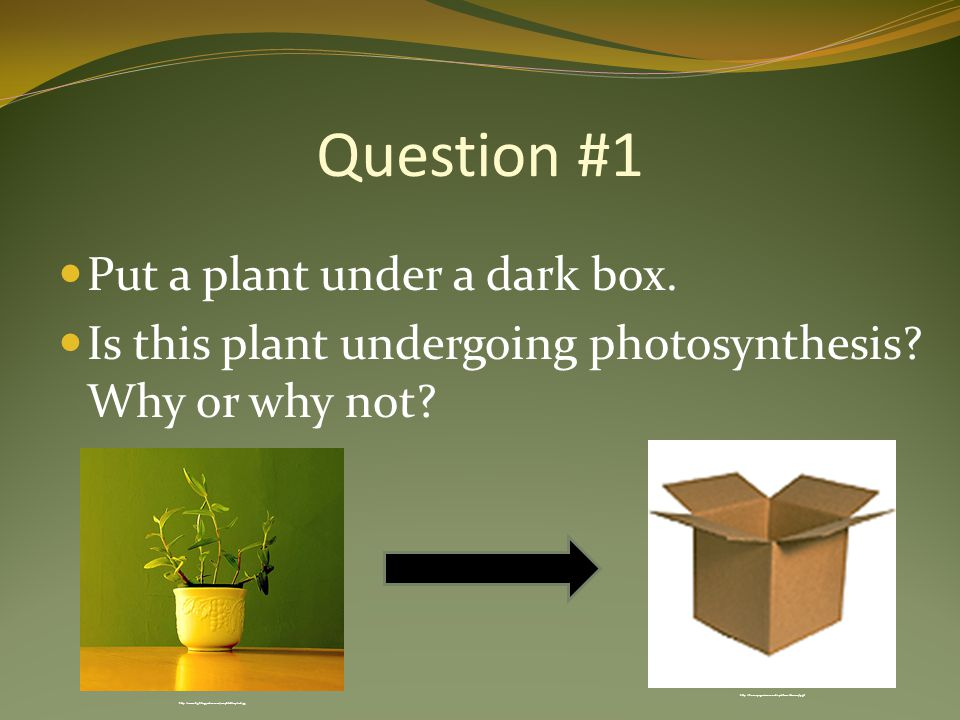 Question #1 Put a plant under a dark box. Is this plant undergoing photosynthesis.