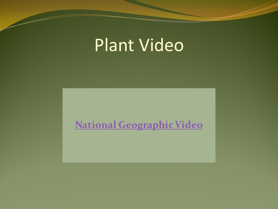 Plant Video National Geographic Video
