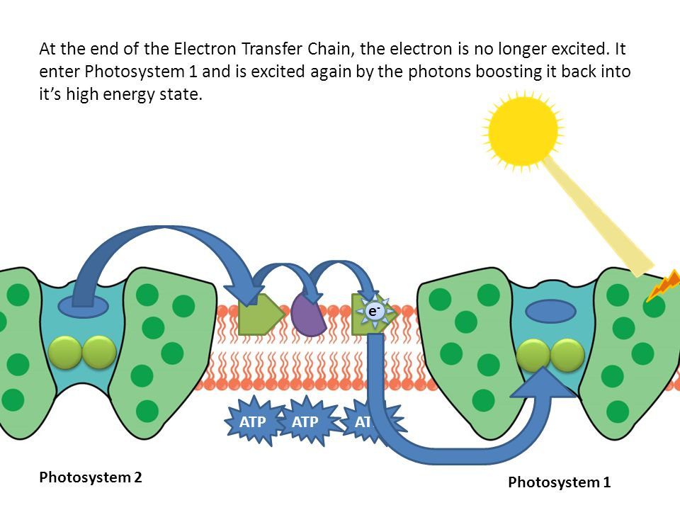 ATP At the end of the Electron Transfer Chain, the electron is no longer excited.