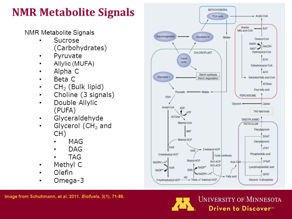 NMR Metabolite Signals Sucrose (Carbohydrates) Pyruvate Allylic (MUFA) Alpha C Beta C CH 2 (Bulk lipid) Choline (3 signals) Double Allylic (PUFA) Glyceraldehyde Glycerol (CH 2 and CH) MAG DAG TAG Methyl C Olefin Omega-3 Image from Schuhmann, et al.