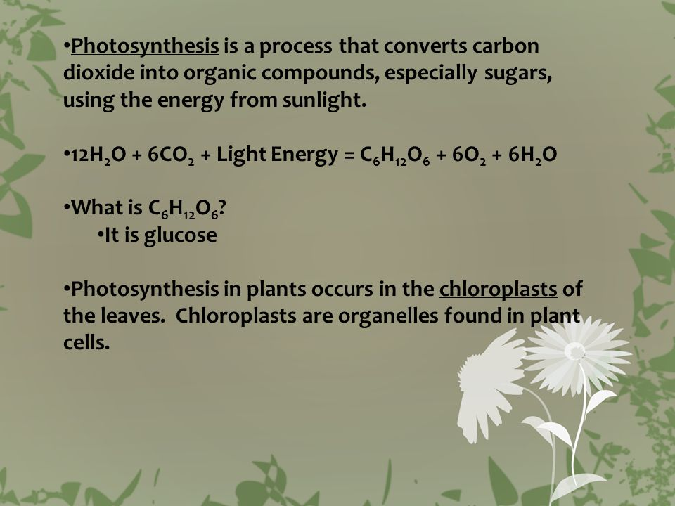 Chloroplasts contain what pigments.