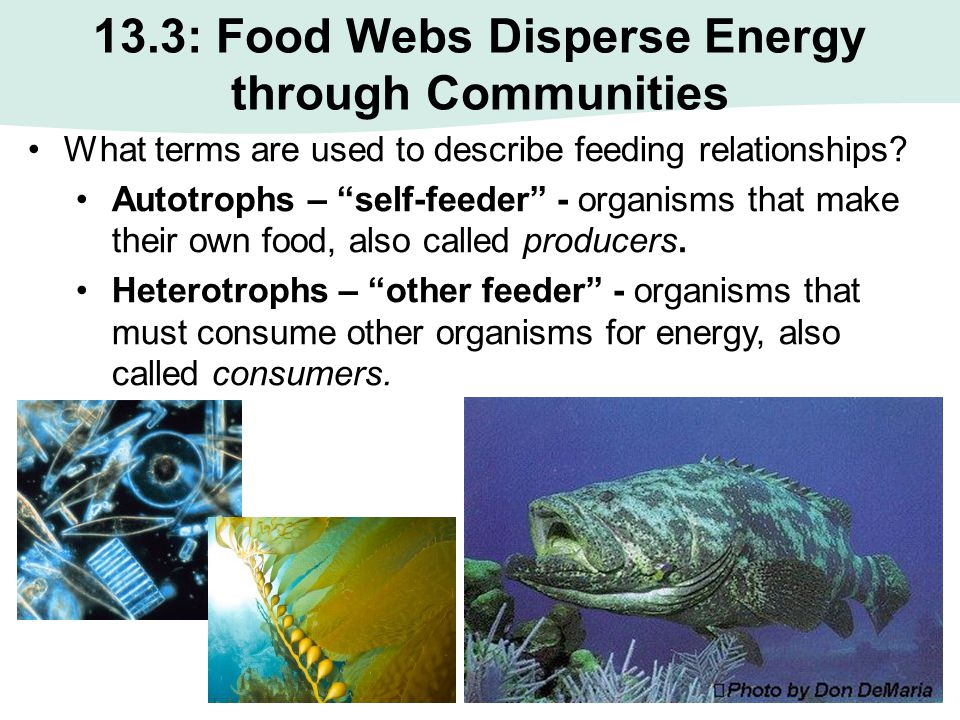 """13.3: Food Webs Disperse Energy through Communities What terms are used to describe feeding relationships? Autotrophs – """"self-feeder"""" - organisms that"""