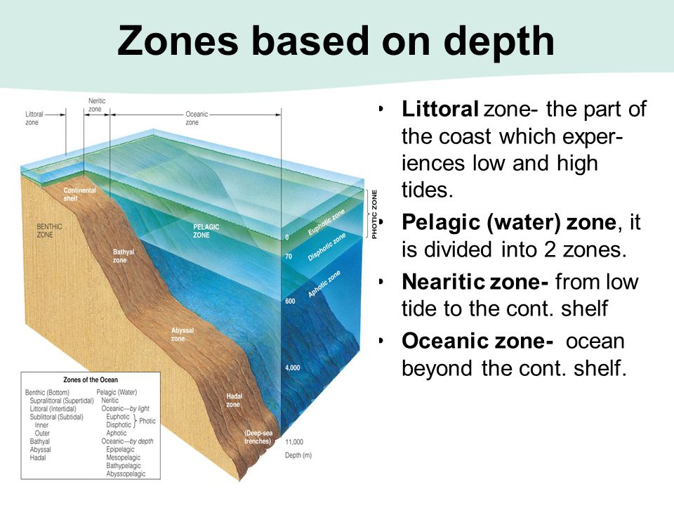 Zones based on depth Littoral zone- the part of the coast which exper- iences low and high tides. Pelagic (water) zone, it is divided into 2 zones. Ne