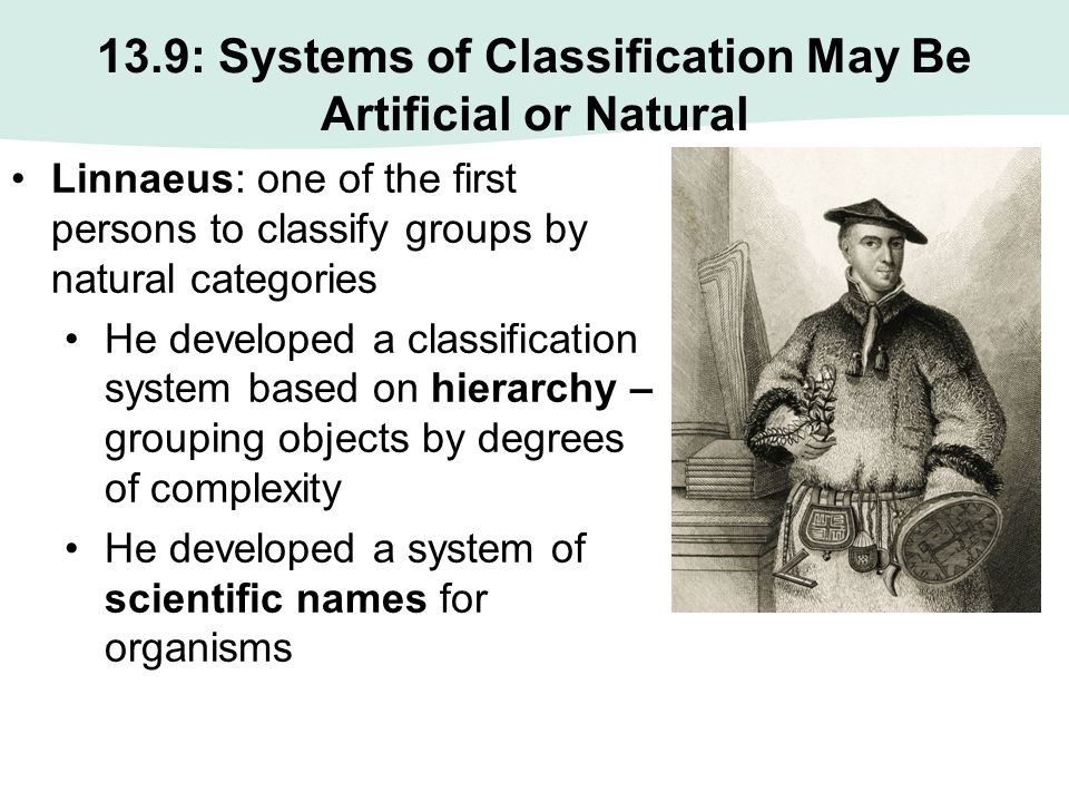 13.9: Systems of Classification May Be Artificial or Natural Linnaeus: one of the first persons to classify groups by natural categories He developed
