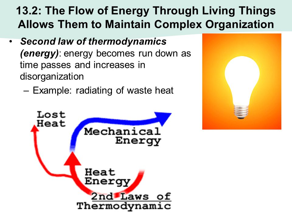13.2: The Flow of Energy Through Living Things Allows Them to Maintain Complex Organization Second law of thermodynamics (energy): energy becomes run