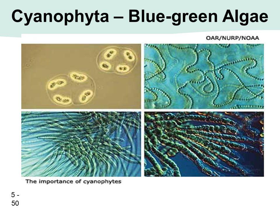 5 - 50 Cyanophyta – Blue-green Algae