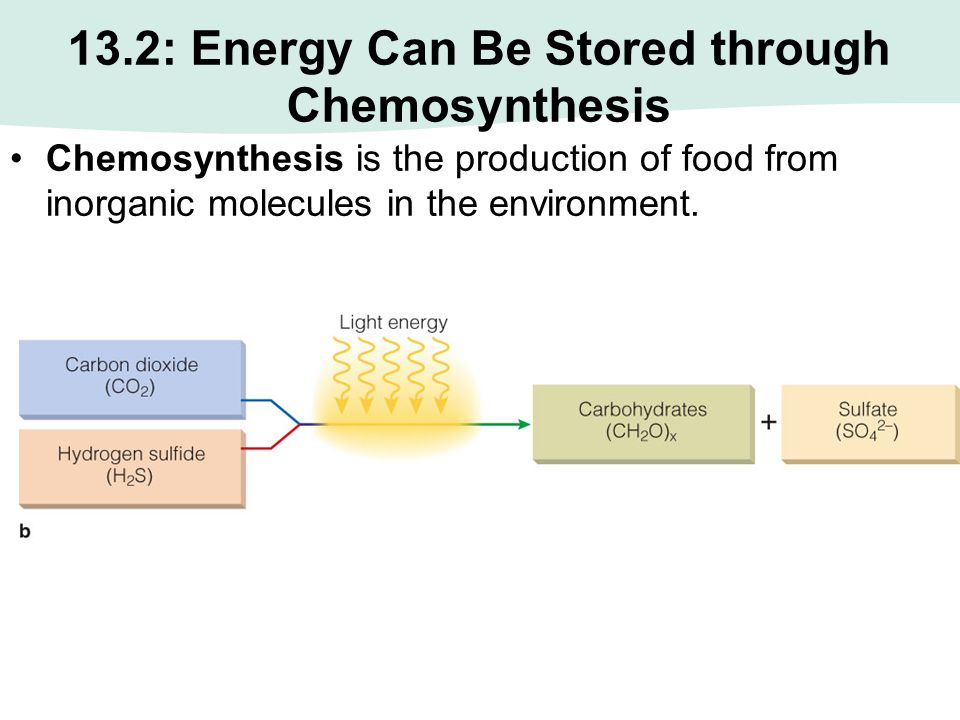 13.2 Energy Can Also Be Stored through Chemosynthesis A form of chemosynthesis.