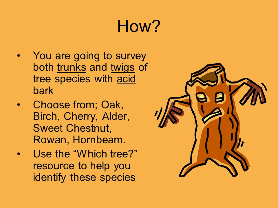 How? You are going to survey both trunks and twigs of tree species with acid bark Choose from; Oak, Birch, Cherry, Alder, Sweet Chestnut, Rowan, Hornb