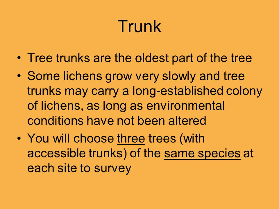 Trunk Tree trunks are the oldest part of the tree Some lichens grow very slowly and tree trunks may carry a long-established colony of lichens, as lon