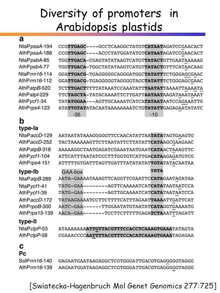 Diversity of promoters in Arabidopsis plastids [Swiatecka-Hagenbruch Mol Genet Genomics 277:725]