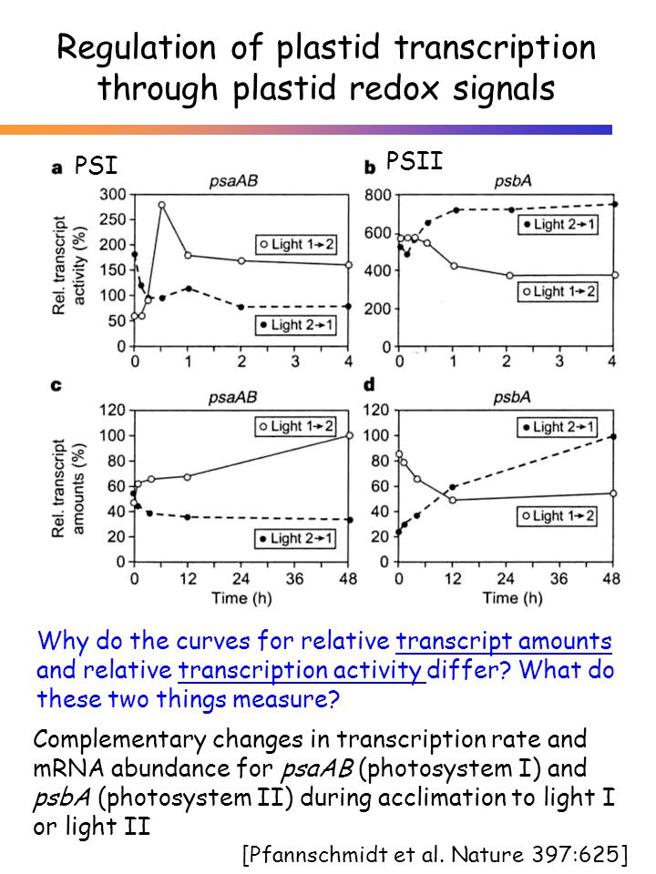 Regulation of plastid transcription through plastid redox signals Complementary changes in transcription rate and mRNA abundance for psaAB (photosyste