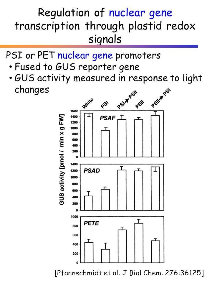 Regulation of nuclear gene transcription through plastid redox signals [Pfannschmidt et al. J Biol Chem. 276:36125] PSI or PET nuclear gene promoters