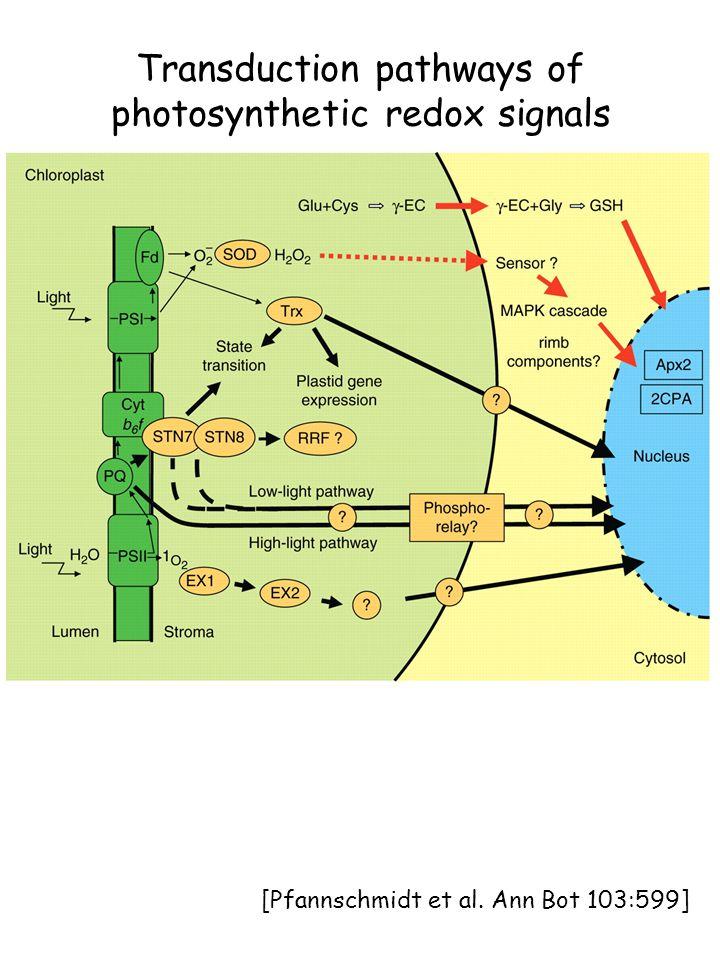Transduction pathways of photosynthetic redox signals [Pfannschmidt et al. Ann Bot 103:599]