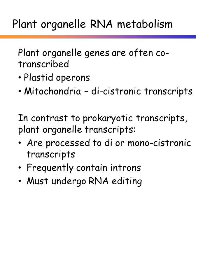 Plant organelle genes are often co- transcribed Plastid operons Mitochondria – di-cistronic transcripts In contrast to prokaryotic transcripts, plant