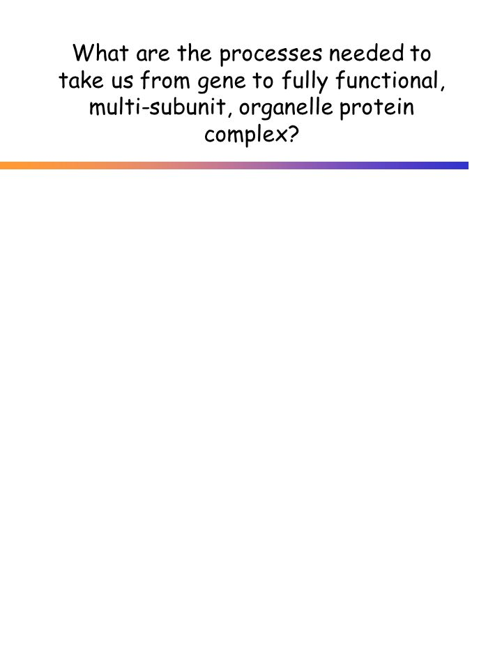 What are the processes needed to take us from gene to fully functional, multi-subunit, organelle protein complex