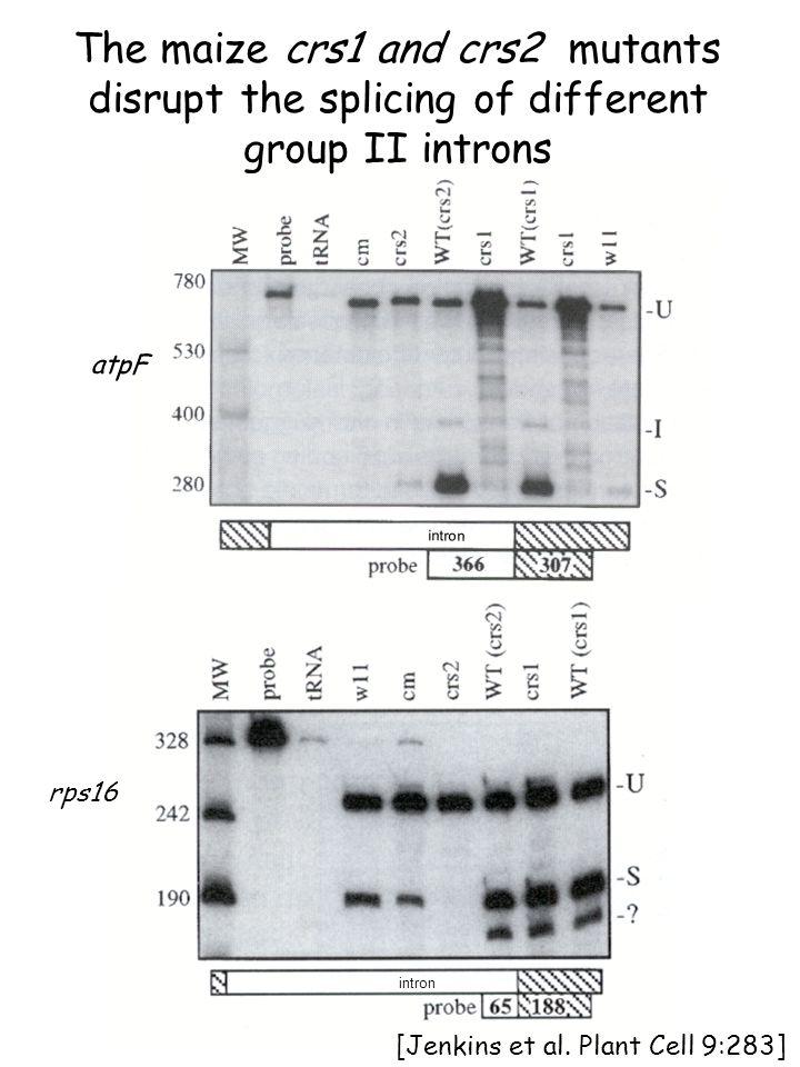 atpF intron rps16 intron [Jenkins et al.