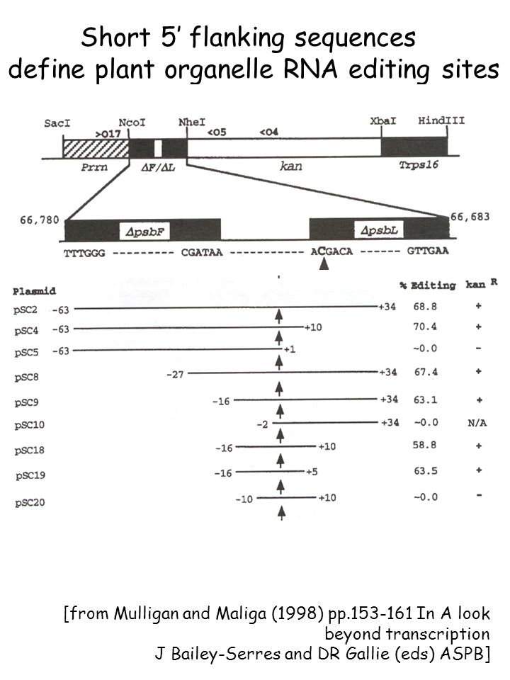Short 5' flanking sequences define plant organelle RNA editing sites [from Mulligan and Maliga (1998) pp.153-161 In A look beyond transcription J Bailey-Serres and DR Gallie (eds) ASPB]