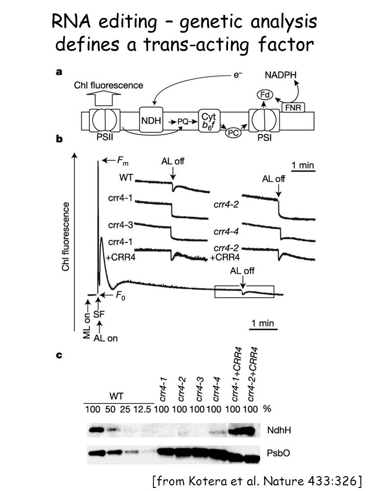RNA editing – genetic analysis defines a trans-acting factor [from Kotera et al. Nature 433:326]