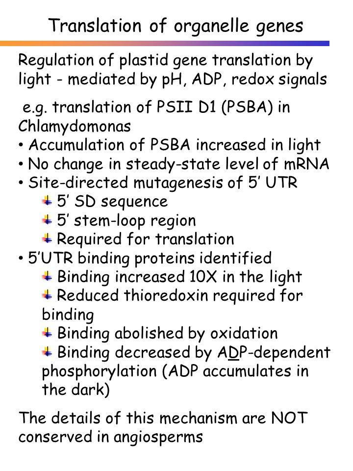 Regulation of plastid gene translation by light - mediated by pH, ADP, redox signals e.g. translation of PSII D1 (PSBA) in Chlamydomonas Accumulation