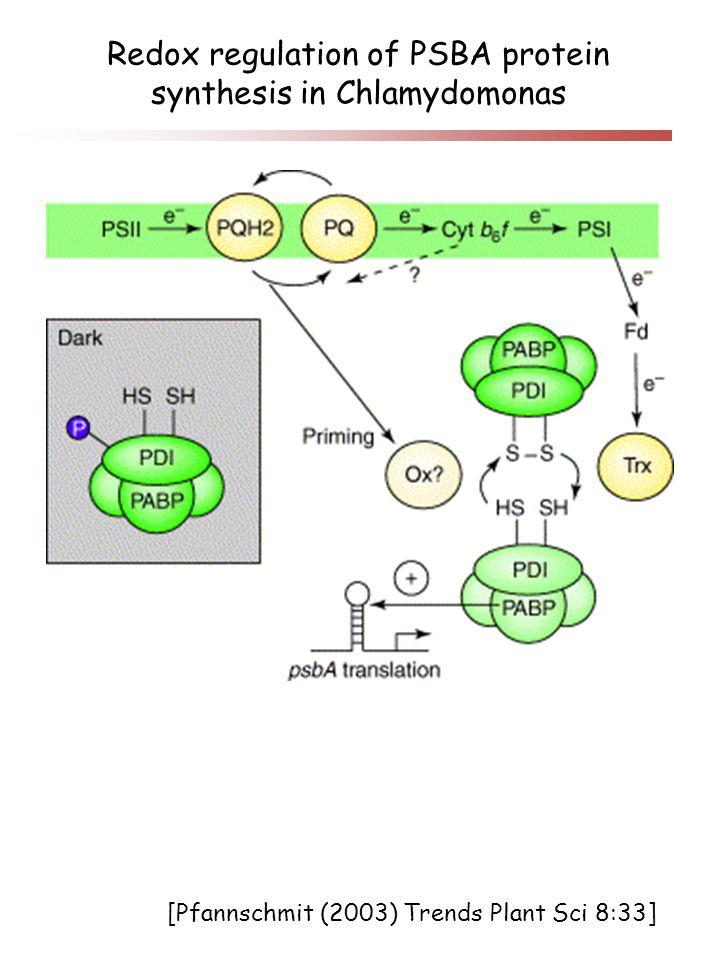 Redox regulation of PSBA protein synthesis in Chlamydomonas [Pfannschmit (2003) Trends Plant Sci 8:33]