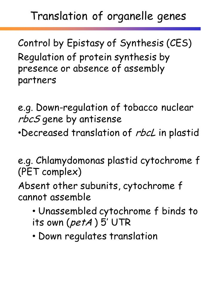 Control by Epistasy of Synthesis (CES) Regulation of protein synthesis by presence or absence of assembly partners e.g. Down-regulation of tobacco nuc