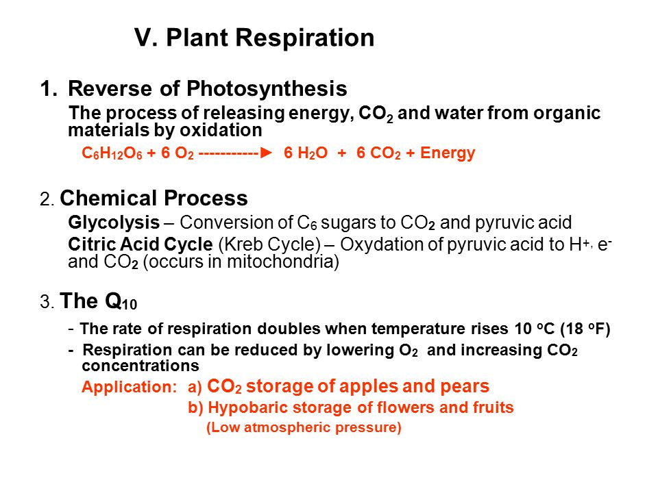 V. Plant Respiration 1.Reverse of Photosynthesis The process of releasing energy, CO 2 and water from organic materials by oxidation C 6 H 12 O 6 + 6