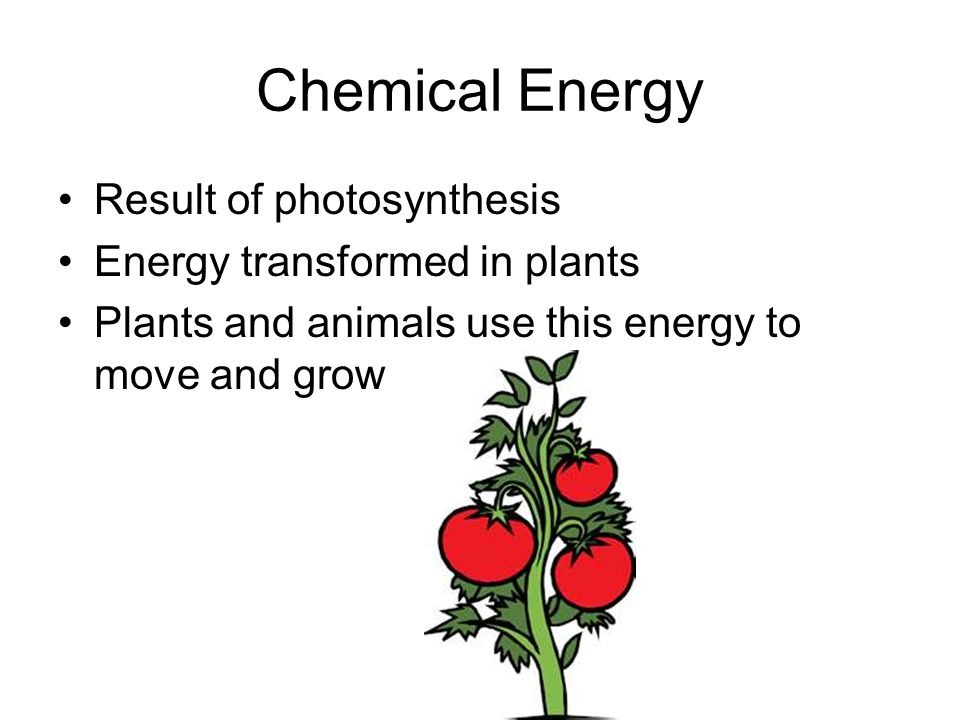 Chemical Energy Result of photosynthesis Energy transformed in plants Plants and animals use this energy to move and grow