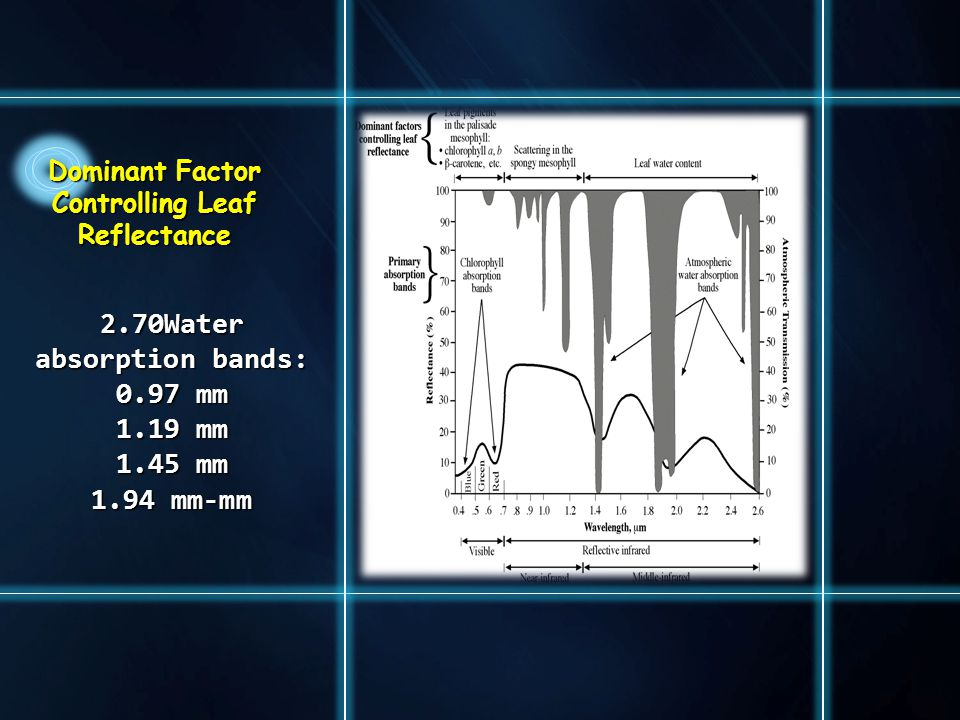 Dominant Factor Controlling Leaf Reflectance2.70Water absorption bands: 0.97 mm 1.19 mm 1.45 mm 1.94 mm-mm