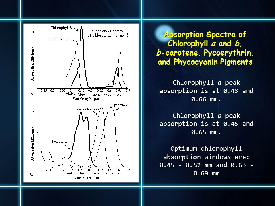 Absorption Spectra of Chlorophyll a and b, b-carotene, Pycoerythrin, and Phycocyanin Pigments Chlorophyll a peak absorption is at 0.43 and 0.66 mm. Ch