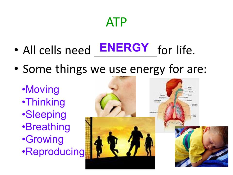 ATP All cells need __________for life.