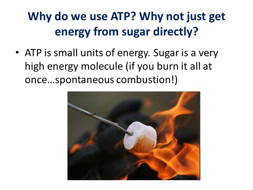 Why do we use ATP? Why not just get energy from sugar directly? ATP is small units of energy. Sugar is a very high energy molecule (if you burn it all