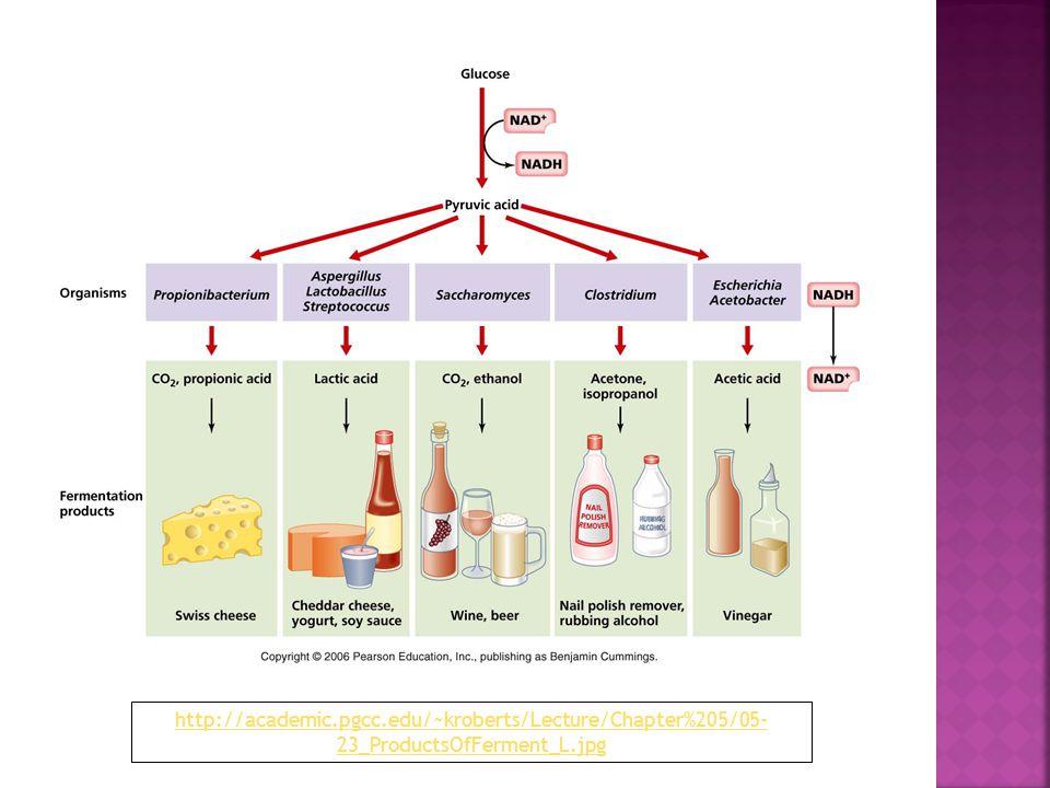 http://academic.pgcc.edu/~kroberts/Lecture/Chapter%205/05- 23_ProductsOfFerment_L.jpg