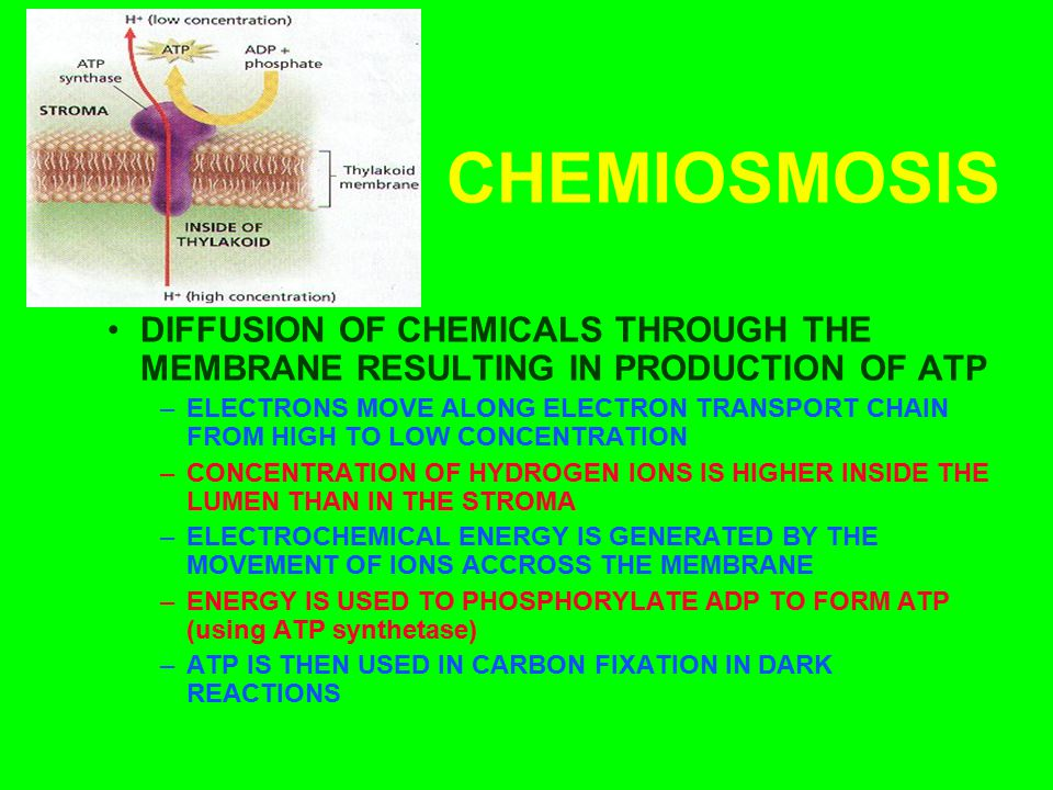 CHEMIOSMOSIS DIFFUSION OF CHEMICALS THROUGH THE MEMBRANE RESULTING IN PRODUCTION OF ATP –ELECTRONS MOVE ALONG ELECTRON TRANSPORT CHAIN FROM HIGH TO LO