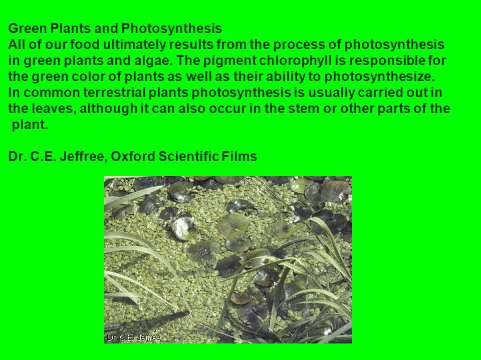 PHOTOSYSTEM I e - e e e e - - - - ATP CHLOROPHYLL ELECTRON ACCEPTORS ADP + P ELECTRON TRANSPORT CHAIN e - cytochromes SUN