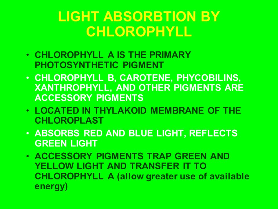 LIGHT ABSORBTION BY CHLOROPHYLL CHLOROPHYLL A IS THE PRIMARY PHOTOSYNTHETIC PIGMENT CHLOROPHYLL B, CAROTENE, PHYCOBILINS, XANTHROPHYLL, AND OTHER PIGM