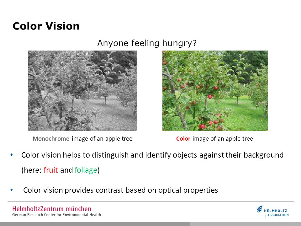 Color Vision Monochrome image of an apple treeColor image of an apple tree Anyone feeling hungry.